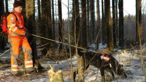 Pelastuskoira ohjaajineen metsässä.