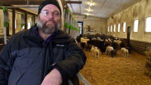 Tapio Rintalan tilalla Yläneellä on nyt kolme lampolaa. Uusin on melkein valmis