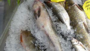 Kaloja jäissä kylmätiskillä.