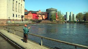Mies kalastaa Kotkan Korkeakoskella.