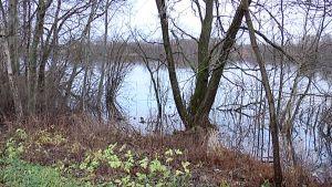 Kuolleita puita vedessä