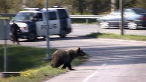 Toukokuussa vuonna 2008 karhu eksyi Vaasan keskustaan.