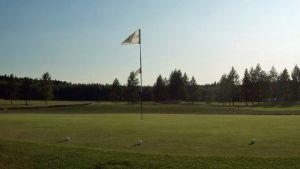 palloja golfkentän viheriöllä