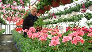 Kuvassa Tiia Ritamäki kukkien keskellä kasvihuoneessaan.
