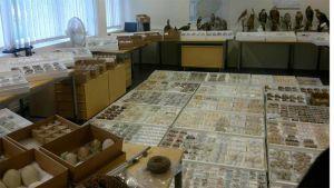 Kuvassa tullin takavarikoimaa aineistoa, laatikoittain munia ja täytettyjä  lintuja