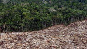 Hakkuualue sademetsässä Brasilian Amazonasin alueella.