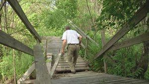 Mies kulkee retkeilyreitillä romahtanutta siltaa.