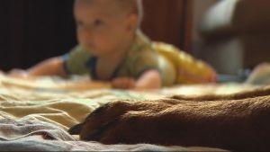 Koiran tassut ja lattialla vatsallaan makaava vauva