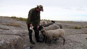 lampaat, kallio, kansallispuisto, lammasvahti