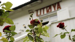 Kukkia Utøyan leirikeskuksen päärakennuksen edustalla 3. lokakuuta 2011.