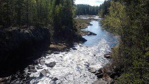 Ala-Koitajoen näkymä.