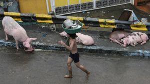 Mies kantaa astioita päänsä päällä sikojen asuttamalla kadulla Manilassa 10. elokuuta 2012.