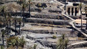 Metsäpaloissa palanut kukkula La Gomeran saarella Espanjassa.