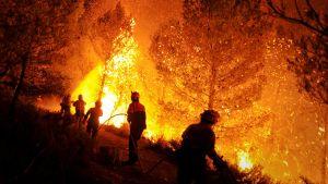 Espanjalaiset palomiehet sammuttanassa roihuavaa metsää Torre de Macanesissa.