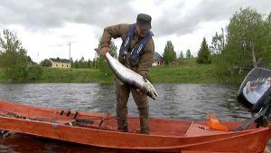 Pasi Penttinen kalassa Tornionjoella.