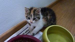 Kissanpoikanen ja ruokakulhot.