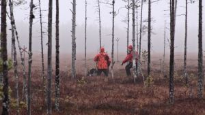 Metsästäjät jäljestävät hirveä koiran kanssa Ilomantsissa.