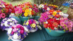 Upeita kukkakimppuja esillä sadonkorjuutapahtumassa.