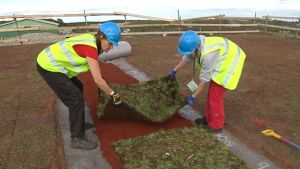 Suomen suurin viherkaton ensisijainen tehtävä on ehkäistä eroosiota