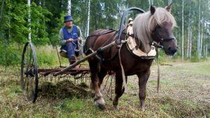 Hevonen heinätöissä Helsingissä