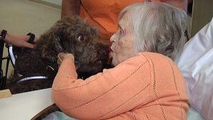 Koira nuolaisee rouvaa Koukkuniemen vanhainkodissa.