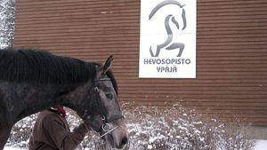 Hevosta talutetaan Ypäjän hevosopistolla