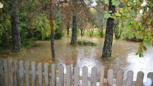 Mynäjoki tulvii piha-aidalle asti Mietoisissa.