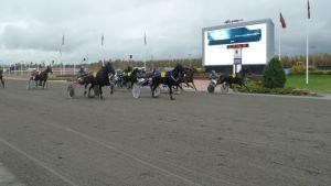 Hevoset juoksevat Porin raviradalla.