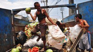 Mies kantaa vesimelonia pois jäterekasta.