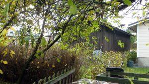Puun oksat kurottavat aidan yli omakotitalon pihassa.