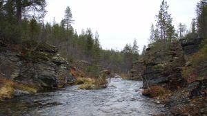 Kuparikivisammalen kasvukallioita Urho Kekkosen kansallispuistossa