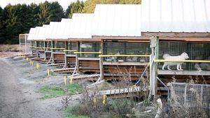 A fur farm in Kokkola. Turkistarha Kokkolassa.