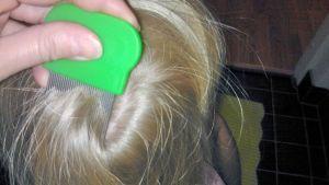Täiden kampaamista hiuksista