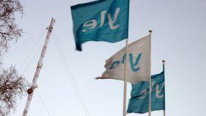 Kuvassa Ylen liput liehuvat kovassa tuulessa