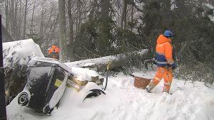 Sähköyhtiön työmiehet raivaavat tuulen sähköjohtojen päälle kaatamaa puuta.
