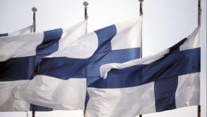 Suomen lippuja liehuu saloissa.