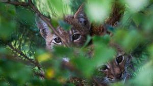 Kuva elokuvasta Metsän tarina