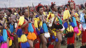 Nuoria swazimaalaisia tyttöjä vuotuisessa ruokotanssi-seremoniassa.