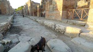 Koira Pompeijin kadulla.