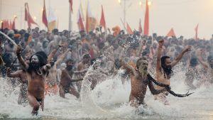 Pyhiinvaeltajahindut juoksivat jokeen Intiassa 14. tammikuuta.