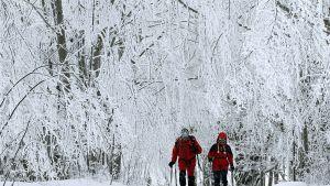 Pariskunta käveli lumisessa metsässä.