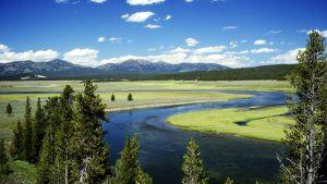 Laaksomaisema Yellowstone-kansallispuistosta.