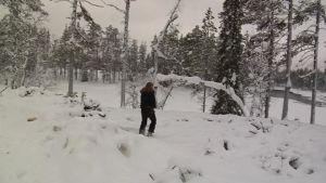 Matkailuyrittäjä Anne Murto tutki Kitkajoen varren hakkuita. Metsähallitus on hakannut alueella 30 hehtaaria.