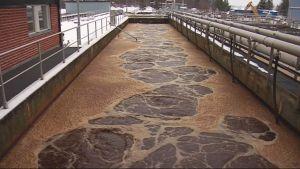 Likavettä altaassa jätevedenpuhdistamolla