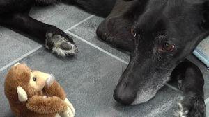 Lupu-koira tuli päivähoitoon, jotta emäntä pääsee rauhassa omille asioilleen.