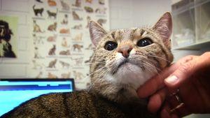 Nelli-kissa sai tabletin eläinlääkärillä