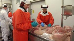Lihanleikkaajat työssä HK Ruokatalon Forssan tehtaan kinkkulinjalla.