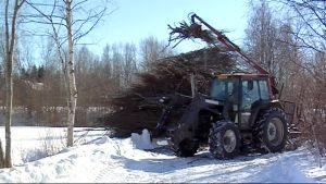 Traktori nostaa risuja ja oksia pääsiäiskokkoon.
