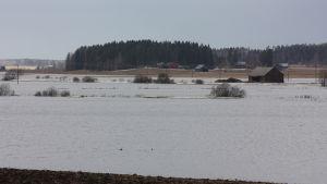 Pellot ovat tulvaveden vallassa. Loimijoki  tulvii Loimaan Alastarolla.