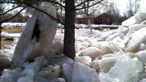 Tulvat ovat nostattaneet jäälohkareita Pyhäjoella pihoille.